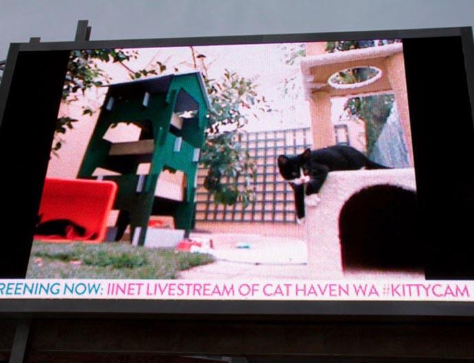 KittyCam